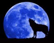 Maria Lourdes - Der Wolf heult den Mond an